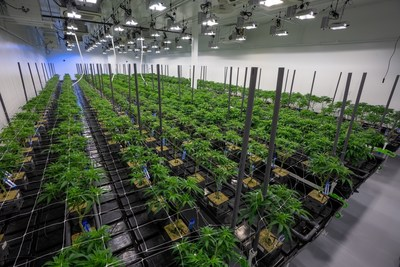 Las Vegas Cultivation Facility (CNW Group/1933 Industries Inc.)