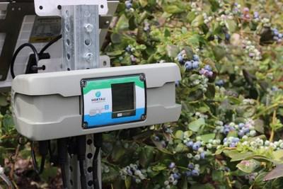 Hortau's technology in a blueberry field (CNW Group/Hortau)