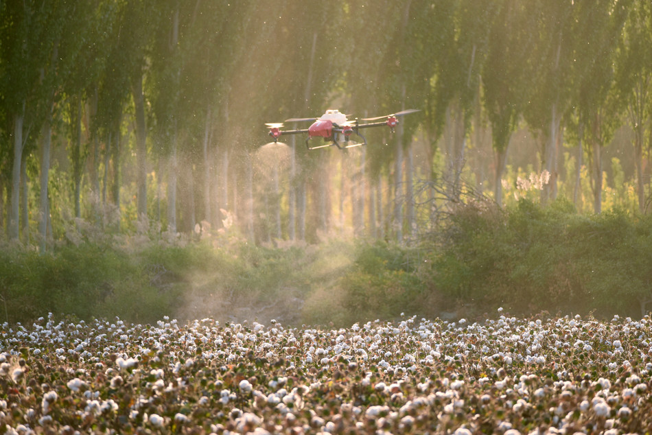 XAG Drone Spraying Cotton Defoliate in Xinjiang