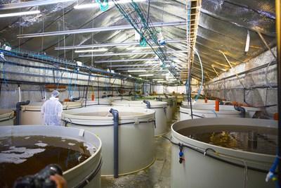 敲定3亿多美元交易后,AquaMaof展示其虾类陆基养殖的突破性技术