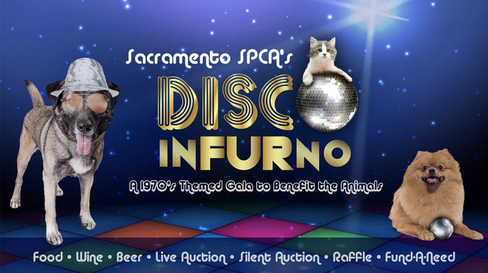 Sacramento SPCA's Disco InFURno - a 1970's themed gala to benefits the animals