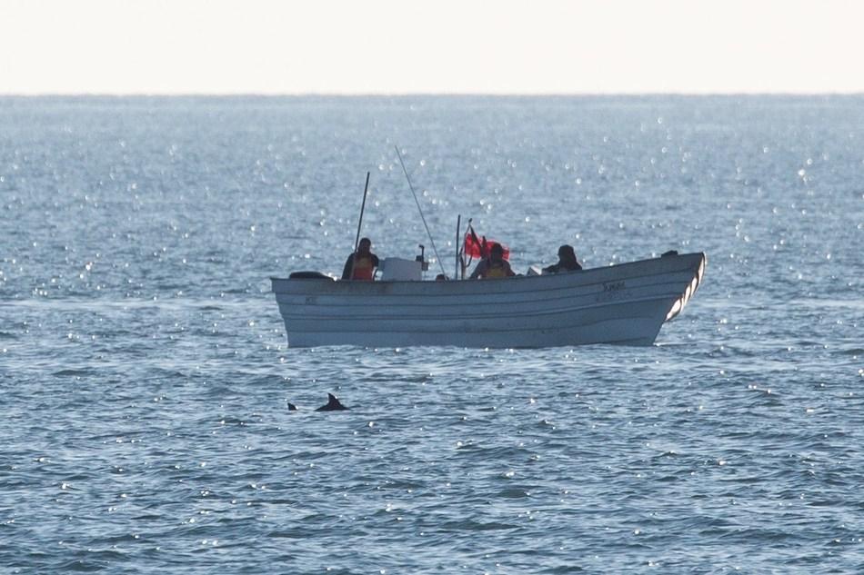 Photo Credit: CONANP/Museo de la Ballena/Sea Shepherd