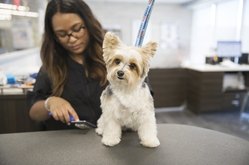 Grooming Contributes to Healthier, Happier Pets