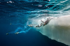 Pew Expresses Disappointment Over Another Year of Inaction on Antarctic Marine Protections