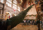 Biltmore starts the holiday season with arrival of 34-foot-tall Christmas tree