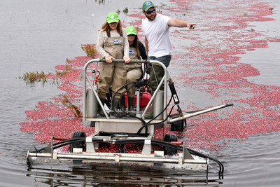 HelloFresh Head Chef and Head of Recipe Development Claudia Sidoti, and Social Media Community Manager Lauren Platt are learning how to pick cranberries on the Gilmore family farm after picking Ocean Spray as the exclusive cranberry provider for the home meal preparation company in Carver, Mass. (Josh Reynolds/AP Images for Ocean Spray)