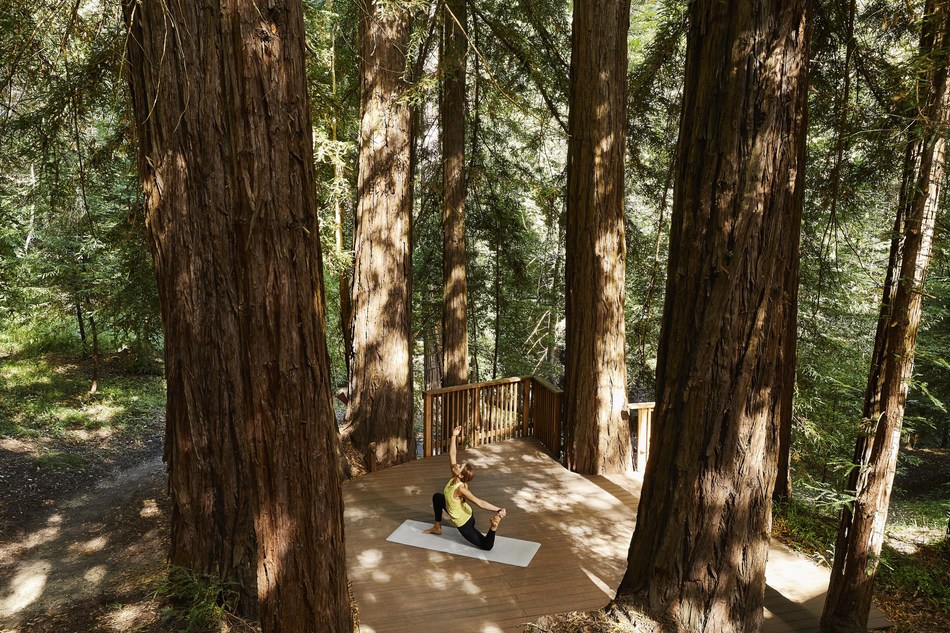 A redwood tree fairy ring invites guest for reflection and relaxation at Canyon Ranch Wellness Retreat – Woodside, now open in Woodside, Calif. Photo by Aubrie Pick.