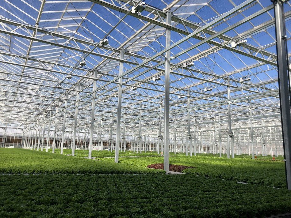 Gotham Greens' produce is grown using hydroponic systems in 100 percent renewable electricity-powered greenhouses, enabling the company to deliver consumers a year-round supply of fresh produce to retail, restaurant and foodservice customers across the Midwest.