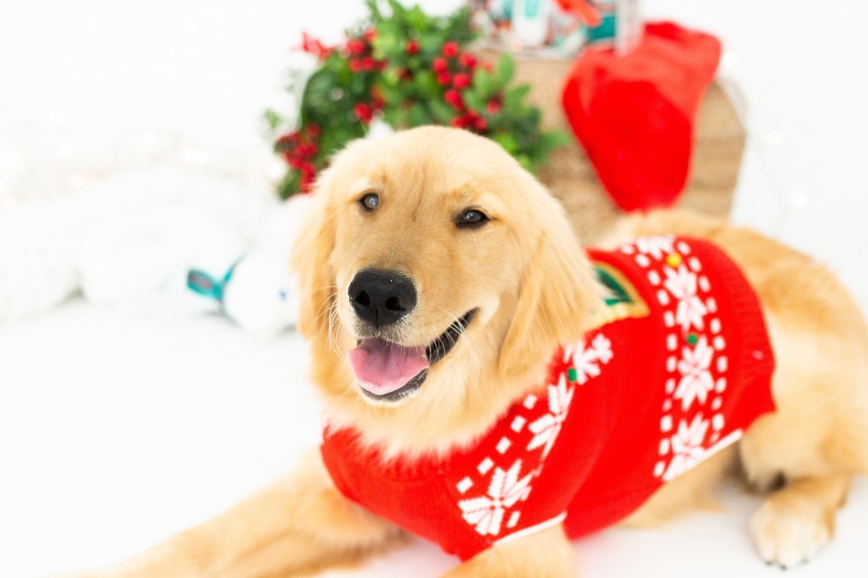According to PetSmart's Pet Poll, the two most popular gifts Canadian pet parents would consider getting their pet are treats (87 per cent) and a toy (84 per cent). (CNW Group/PetSmart Canada)