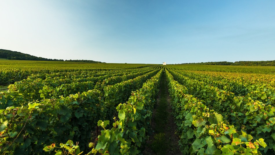 Moët Hennessy at Vinexpo: A Mindful Forum on Living Soils