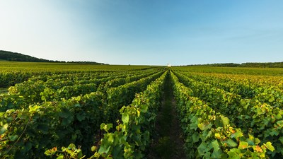 Moet Hennessy at Vinexpo: A Mindful Forum on Living Soils