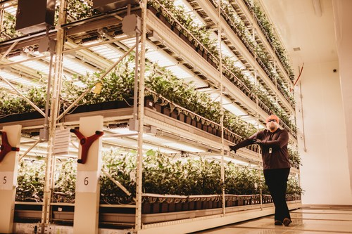 GreenSeal Cannabis Co.'s Master Grower Chad Morphy demonstrates the company's indoor multi-tier vertical cannabis grow system at its production facility in Stratford, ON. (CNW Group/GreenSeal Cannabis Co.)