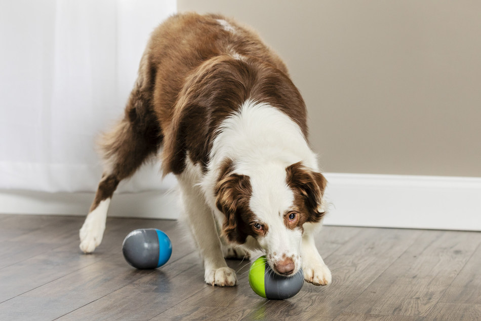 The PetSafe Ricochet Electronic Dog Toy is the recipient of the 2019 Pet Business Industry Recognition Award in the Electronic Dog Toys category.