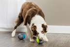PetSafe® Ricochet Electronic Dog Toy Honored with Pet Business Industry Recognition Award