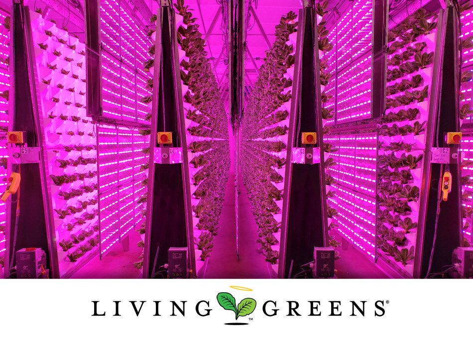 Living Greens Farm is the world's largest, vertical plane, aeroponics grower offering a revolutionary, planet- friendly, indoor-farming approach using no pesticides, no herbicides and no GMOs. Living Greens Farm's patented, Air-Grown farming system accelerates plant growth and harvest cycles by creating the perfect growing conditions for fresh greens and herbs, virtually eliminating the health risks and environmental challenges posed by more traditional farming methods. www.livinggreensfarm.com. (PRNewsfoto/Living Greens Farm)