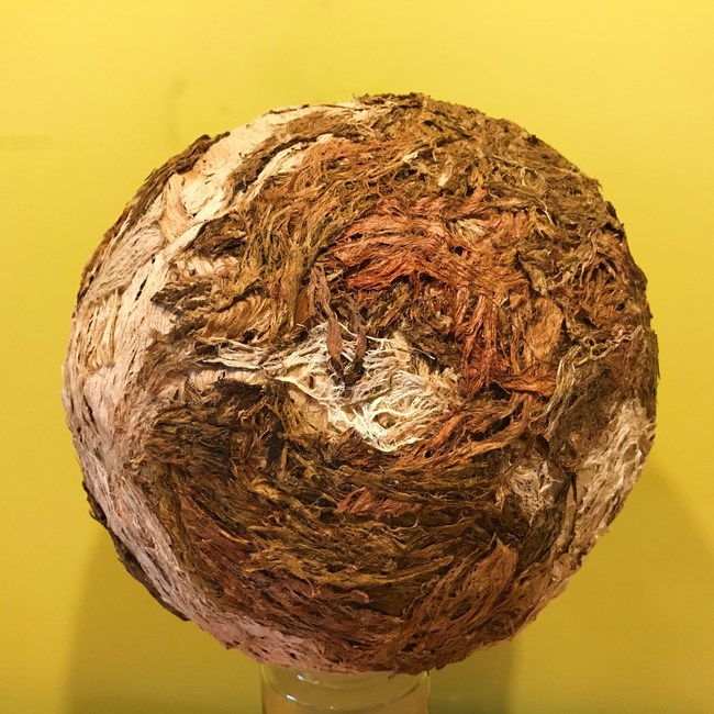 Globe of planet earth made of discarded coconut shells and tree bark from fallen tree branches