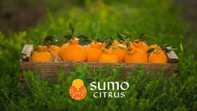2020 Sumo Citrus Season