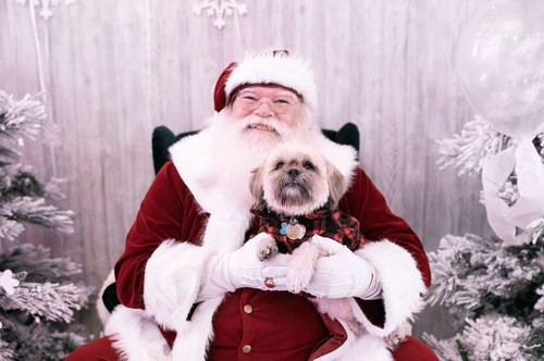 PetSmart Canada Hosts Free Pet Photos With Santa (CNW Group/PetSmart Canada)
