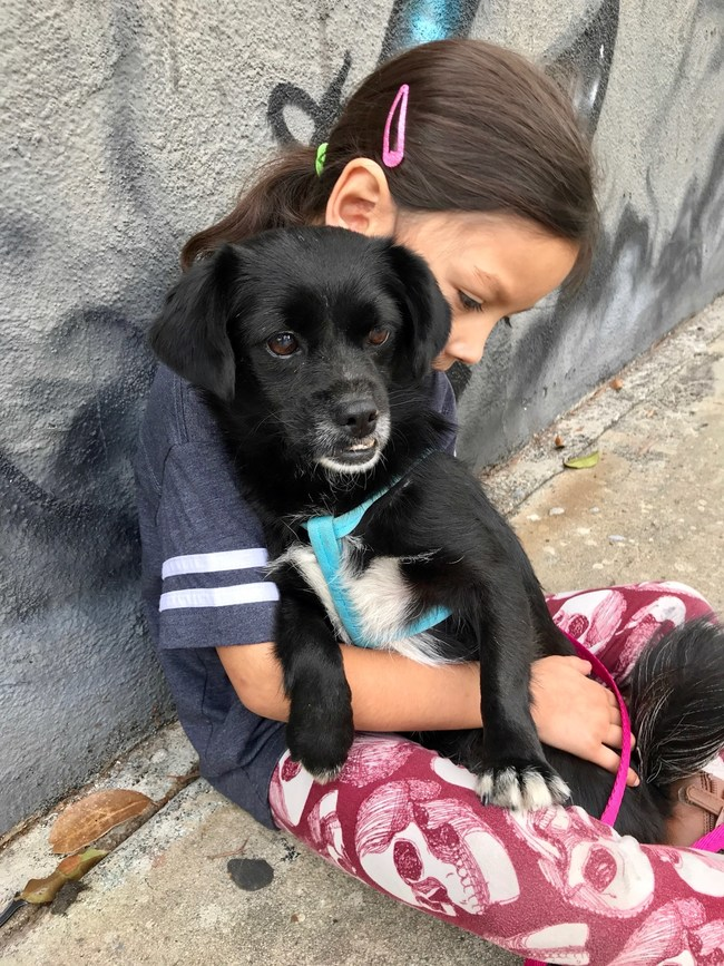 Photos from Animal Rescue Mission