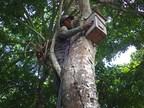 Stichting Loro Parque redt 10 soorten papegaaien van uitsterving in het wild