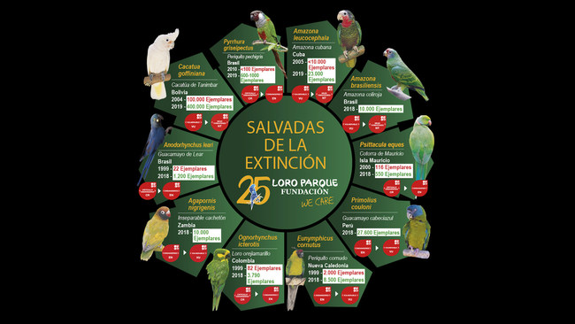 Loro Parque Foundation saves 10 species of parrots from total extinction in the wild