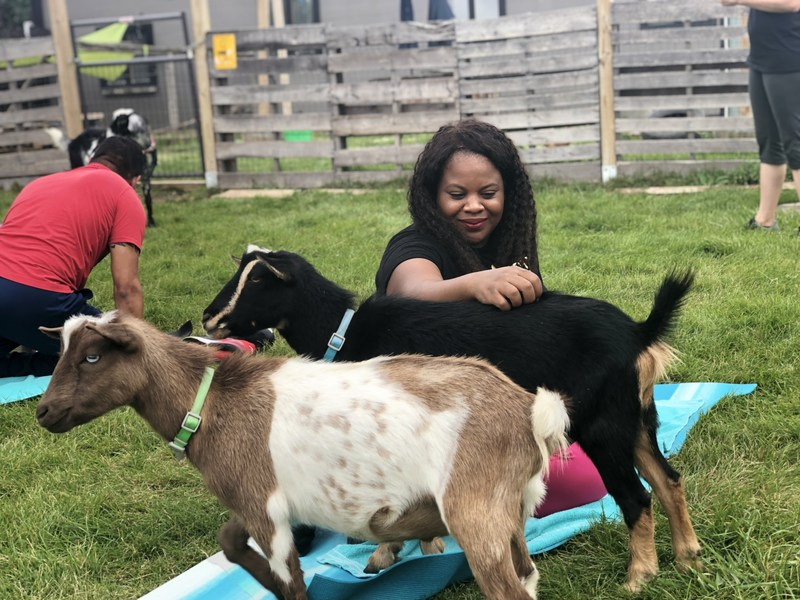 Goats distracted veterans from PTSD, chronic pain, and other issues at a recent goat yoga event organized by Wounded Warrior Project® (WWP). A yoga instructor guided veterans through yoga poses while baby goats roamed about gently bleating and, occasionally, nudging guests.