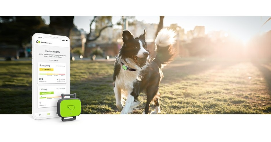 Whistle Labs Launches Innovative Pet Wearable Focused On Health And Fitness As Well As An All New Nutrition Feature