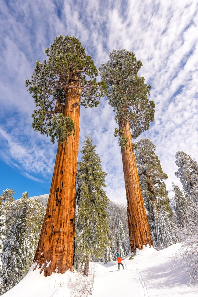 Photo by Roy E. Williams II, Save the Redwoods League