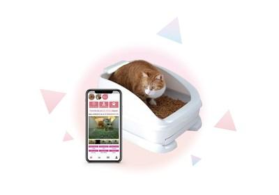 Smart litter box toletta® monitors cat health signals 24/7.