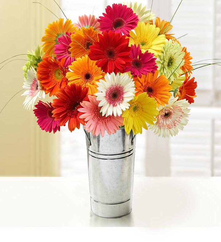 1-800-Flowers.com Happy Gerbera Daisies
