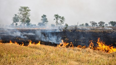 Agricultural waste burnt across large parts of India leads to increased environmental pollution.  (Image Courtesy: Shutterstock. For representational purpose only)