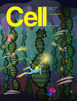 The cover image for the latest edition of Cell relates to an NYU Langone study on transcriptional scanning.