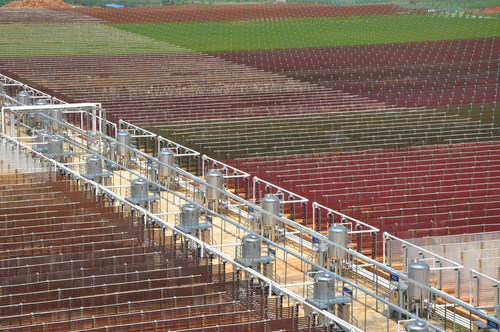 Natural Astaxanthin State-of-the-Art Farm with glass-tube photobioreactors