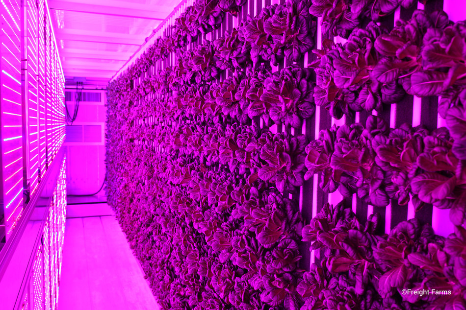 With Freight Farms' Greenery onsite, educational and corporate campuses will be able to grow more than 500 varieties of crops, like Salanova Green Butter Lettuce, at commercial scale year-round.
