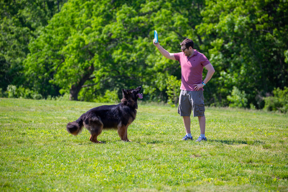 """Noah Davidsohn, CTO of Rejuvenate Bio and former Wyss Institute Research Scientist, was inspired by his German Shepherd, Bear, to develop a gene therapy that can help dogs live healthier lives. Credit: Wyss Institute at Harvard University"""
