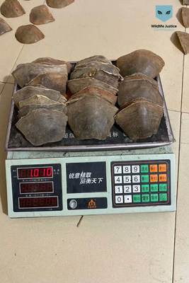 Pangolin scales being weighed. Photo shared by traders with WJC investigators. December 2019.