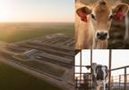 Research Shows California Dairy Farms Reducing Environmental Footprint