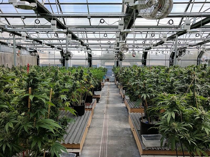 Golden Gate University Cannabis