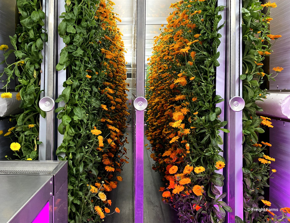 Freight Farms' Greenery can produce more than 500 varieties of crops like calendula (pictured) at commercial scale year-round, using 99.8% less water than traditional agriculture. Four rows of panels on a flexible moving rack system house more than 8,000 living plants at once, creating a dense canopy of fresh crops.