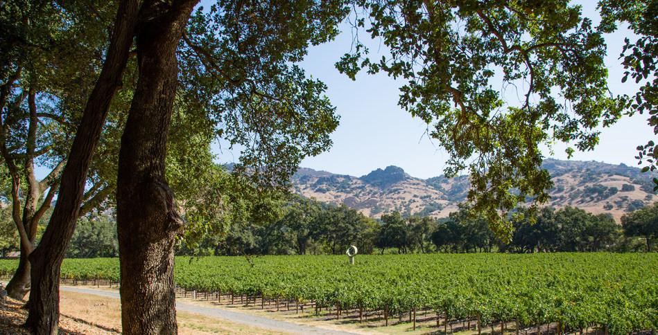 (PRNewsfoto/Stag's Leap Wine Cellars)