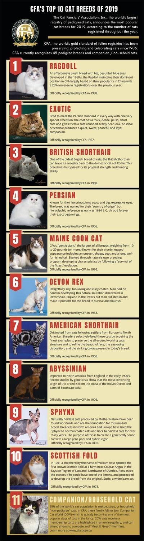 The Cat Fanciers Association Inc Cfa Announces Top 10 Most Popular Cat Breeds