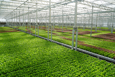 Gotham Greens' produce is grown using hydroponic systems that use 95 percent less water and 97 percent less land than conventional farming. The Baltimore greenhouse will produce more than six million heads of lettuce annually, including the new regional favorite, Chesapeake Crunch, inspired by the Chesapeake Bay watershed.