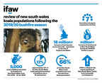 Koala Emergency: IFAW Calls For Emergency Protections For NSW Koalas After Report Reveals True Impact Of Bushfires