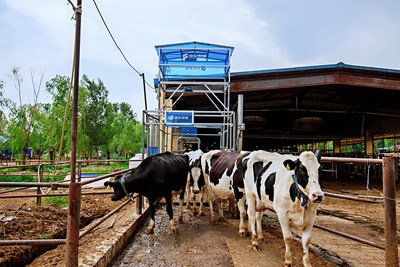 JD Digits' newly launched AI-powered Solutions in Beijing for Cattle Raising