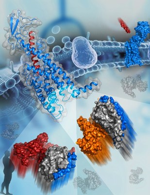 Glucagon Receptor Structures Reveal G protein Specificity Mechanism