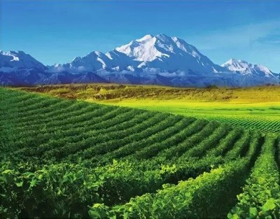 Helan Mountain's East Foothill Wine Region in Ningxia