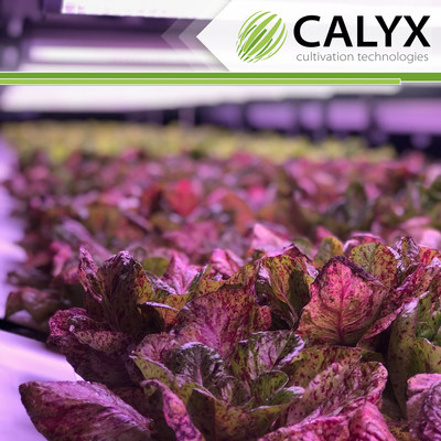 Calyx up close and personal