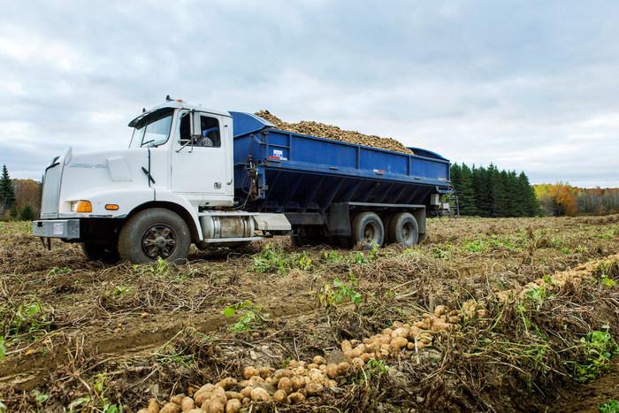 McCain Foods distribuera 20 millions de livres de pommes de terre pour aider à lutter contre l'insécurité alimentaire pendant la pandémie de la COVID-19. (Groupe CNW/McCain Foods)