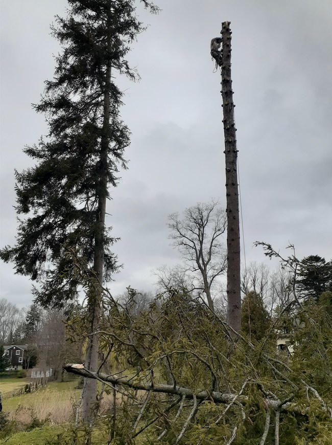 Crews are removing trees after major strong winds all over Long Island