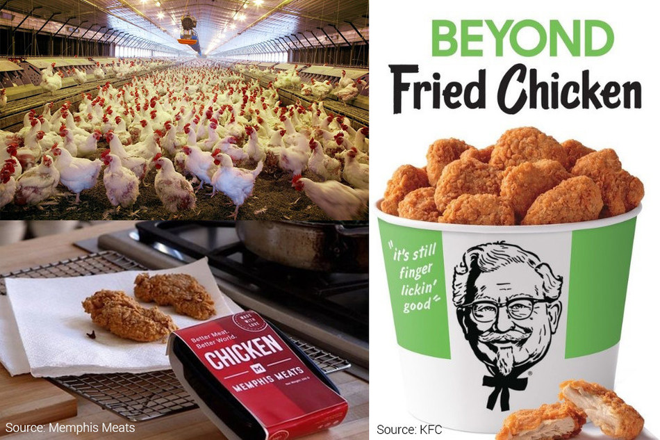 Top Left: Intensive farming practices have been linked with several disease outbreaks. Right: Plant-based meat has become a common site in fast food restaurants. When KFC trialled Beyond Meat's fried chicken analogue in Atlanta in 2019, it sold out in less than 5 hours (Image source: KFC). Bottom Left: Chicken nuggets made from cultured chicken cells. (Image source: Memphis Meats).
